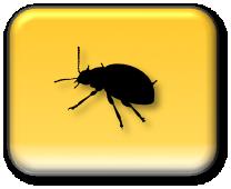 Stuur een bug report